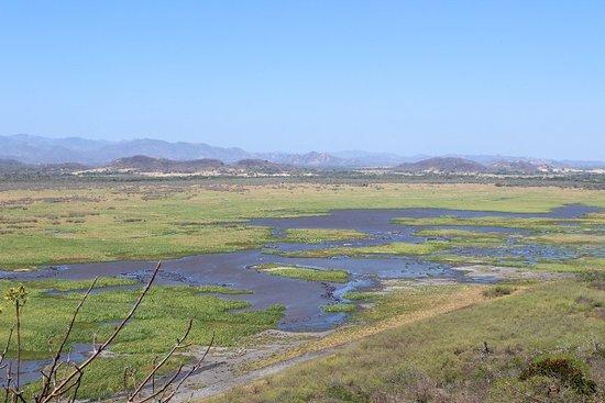 Palo Verde National Park張圖片