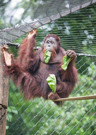 Greenville Zoo: Monkey Business