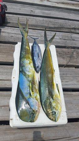 Jackson Marine Adventures: 1 Tuna and 2 Mahi Mahi