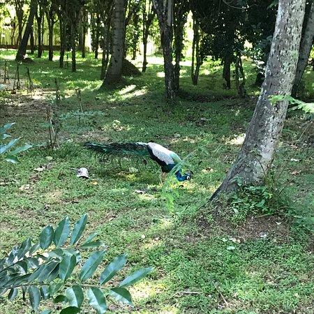 Wellawaya, Srí Lanka: photo3.jpg