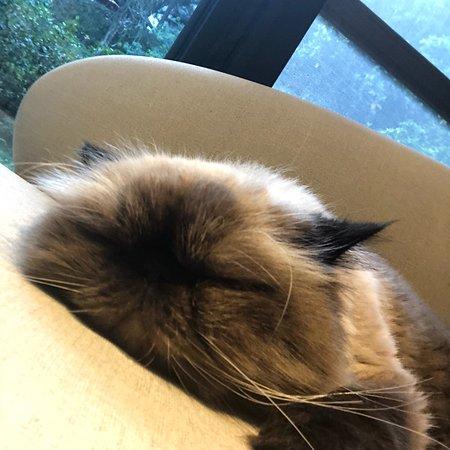 Doris Home: 很棒的民宿 裡面的貓也好可愛
