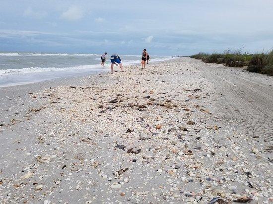 Bowman's Beach照片
