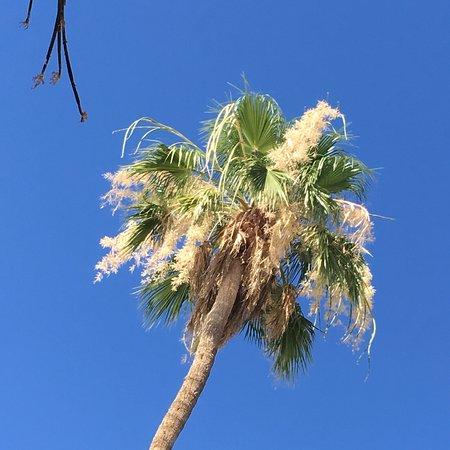 Hidden Palms Resort & Condominiums – fotografia