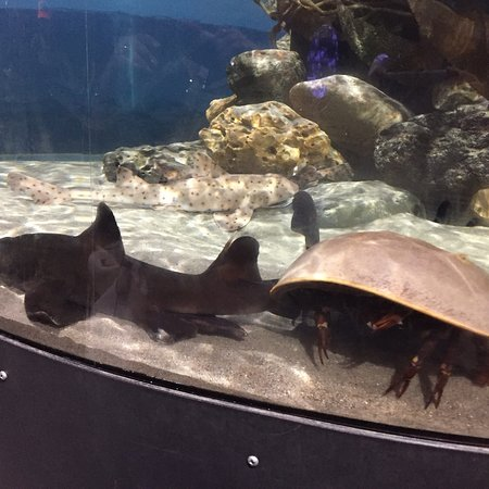Central Coast Aquarium张图片
