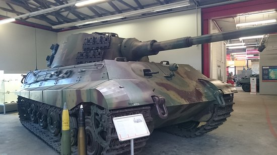 Munster, Germany: やっと会えた虎の二番目