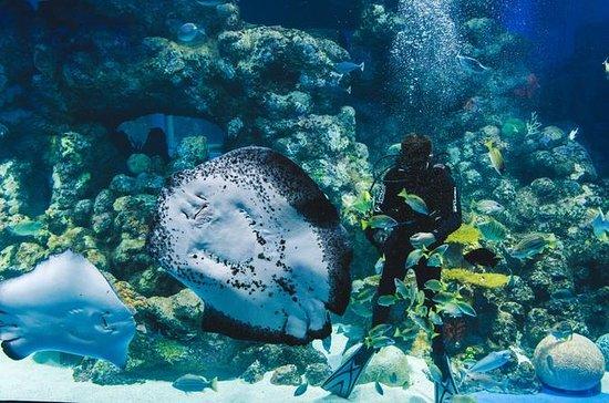 Cairns Aquarium Family Tickets