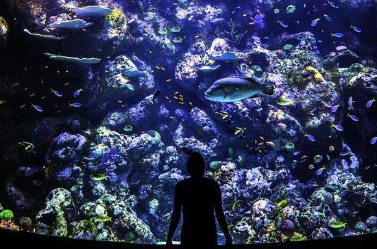 Cairns Aquarium Hinter den Kulissen...