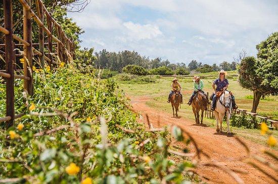 90 Min Horseback Ride