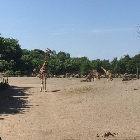 Dublin Zoo ภาพถ่าย