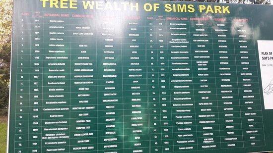 Sim`s Park: tree wealth
