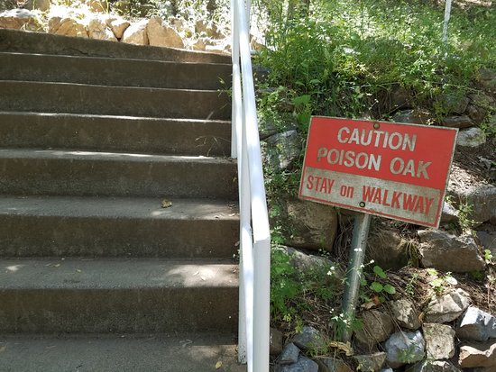 Lakehead, Californien: Poison Oak all over the place