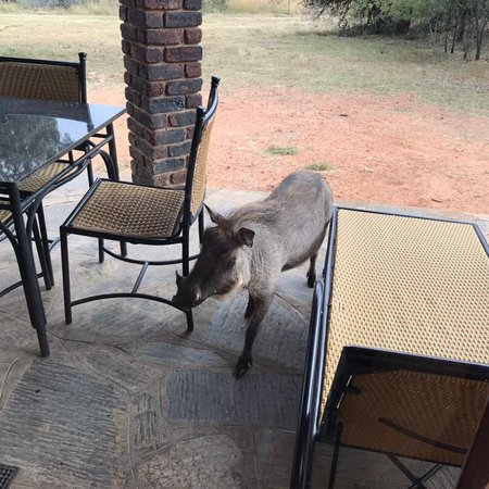 Mabula Private Game Reserve, South Africa: photo9.jpg