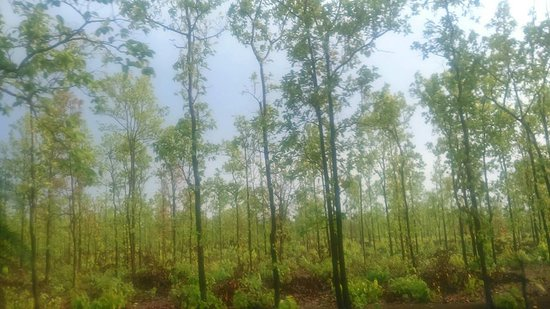 Jhargram District照片