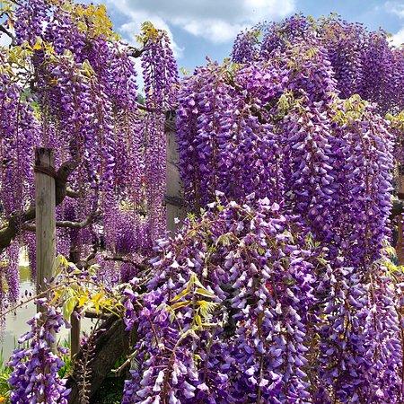 Ashikaga Flower Park ภาพถ่าย