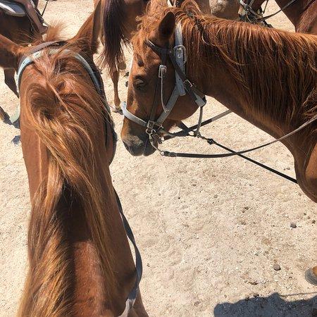 Horses On The Beach: Corpus Christi Photo