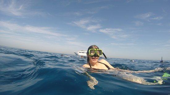 Delfinausflug mit SimSim Reisen