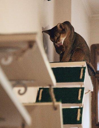 Cat Cafe照片
