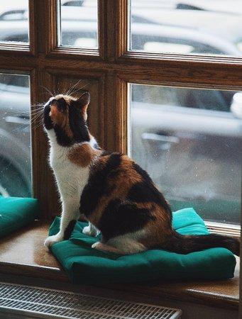 Cat Cafe: Май 2018