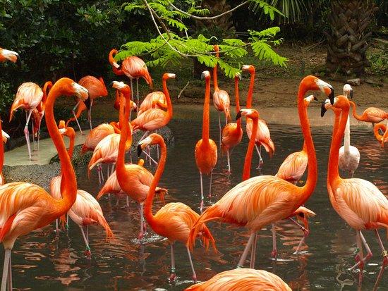 Bermuda Aquarium, Natural History Museum & Zoo: Noisy flamingo exhibit (they fight)
