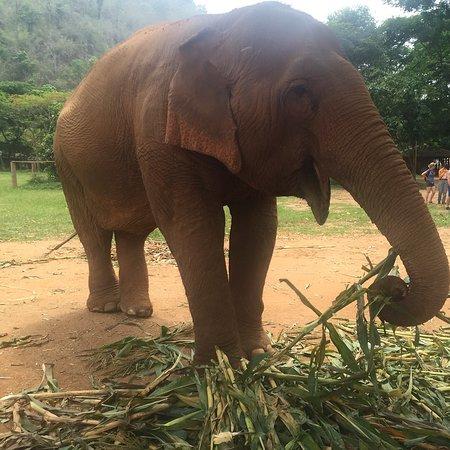 Elephant Nature Park : Watching the elephants feed.
