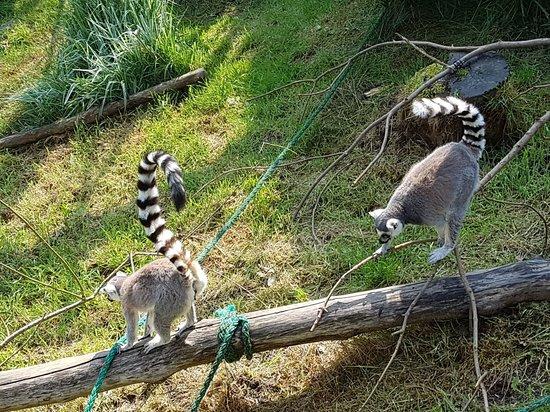 Welsh Mountain Zoo Photo