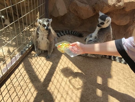 Monkey Park: Feeding the Lemurs