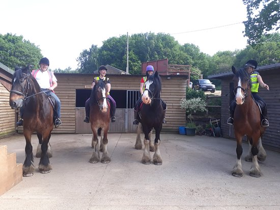Hurst Green Shires : Back at the yard after a lovely ride.......