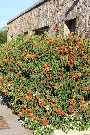 Residence-Club Odalys Les Hameaux de Capra Scorsa: C'est joli cette résidence car c'est très fleuri