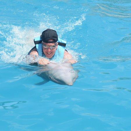Dolphin Discovery Punta Cana Photo