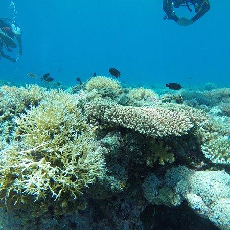 Thresher Cove Dive Resort ภาพถ่าย