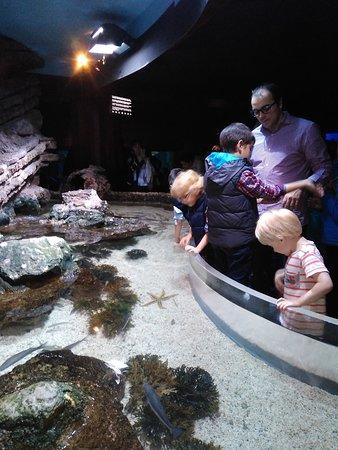Aquarium照片