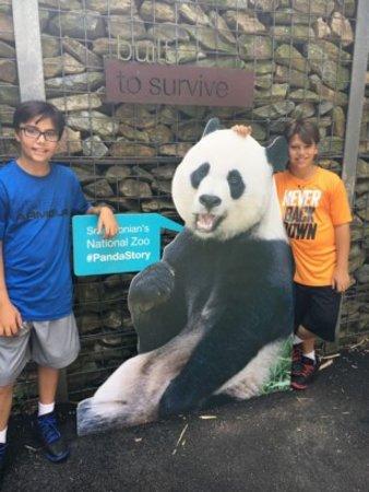 National Zoological Park: Pandalar Şahane