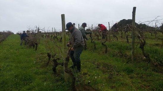 Portugal Farm Experiences: Portugal Farm Experience - Wine Experience