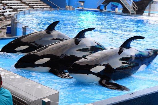 SeaWorld: Whale show