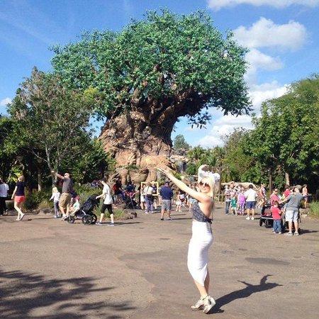 Disney's Animal Kingdom: Tree of life from Pocahontas