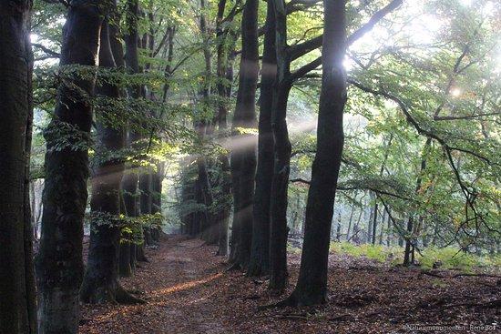 Rheden, Países Baixos: Nationaal Park Veluwezoom