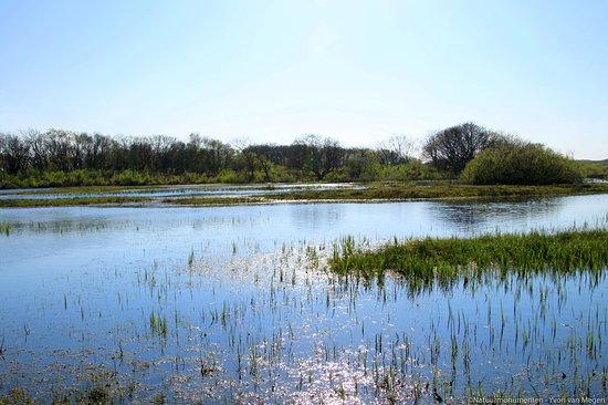 Natuurgebied Zwanenwater