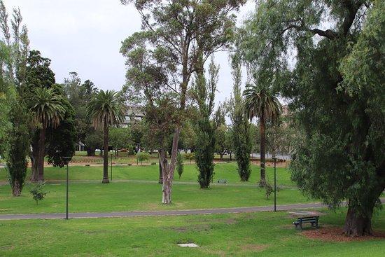 Johnstone Park: More trees