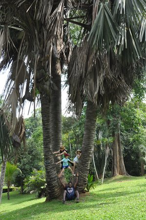 Why Not Getaways: botanical garden Kandy