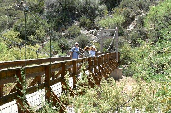 Boyce Thompson Arboretum: Saguaro bloom