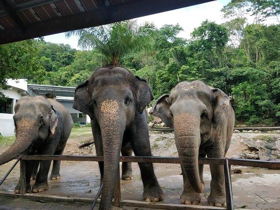 Khao Kheow Open Zoo: Elephants
