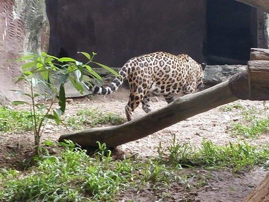 Khao Kheow Open Zoo: Cheetah