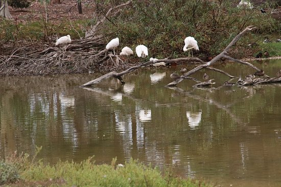 Serendip Sanctuary : None oreflections on the waterf them knew we were there!