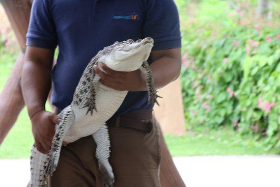 Bali Zoo General Admission Ticket: Buaya Air Tawar