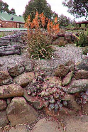 Yarrabee Native Garden: Interesting!