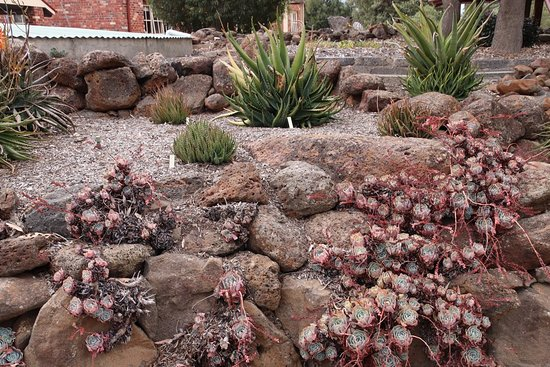 Yarrabee Native Garden: I like the rock gardens!