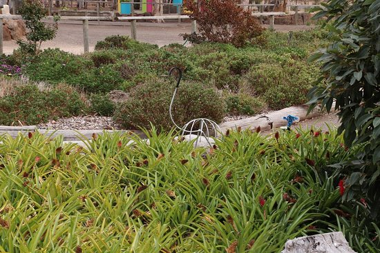 Yarrabee Native Garden张图片