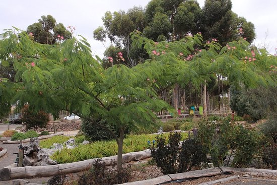 Nice Trees Picture Of Yarrabee Native Garden Lara Tripadvisor