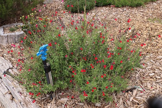 Yarrabee Native Garden: red flowers