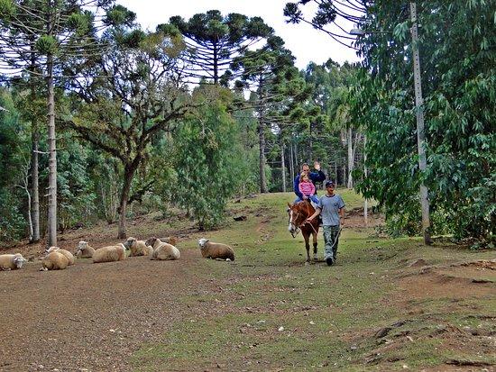 Hotel Recanto Paraíso da Serra: Passeio a cavalo